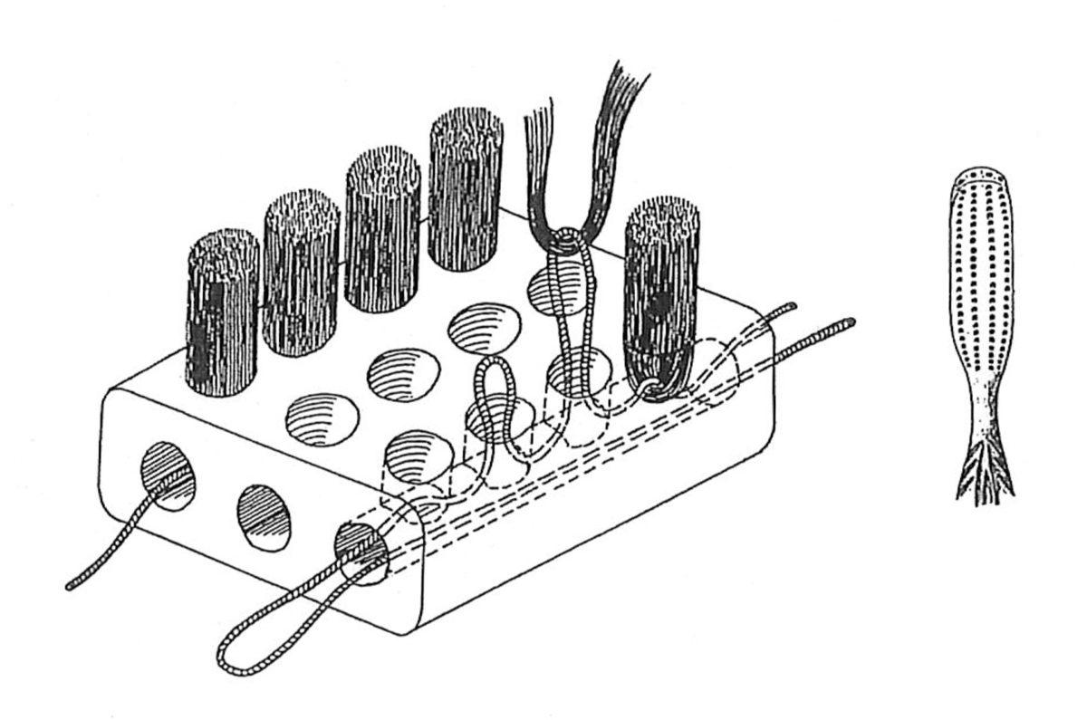 Trepanned bristles